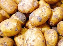 馬鈴薯到底有多重?馬鈴薯悖論